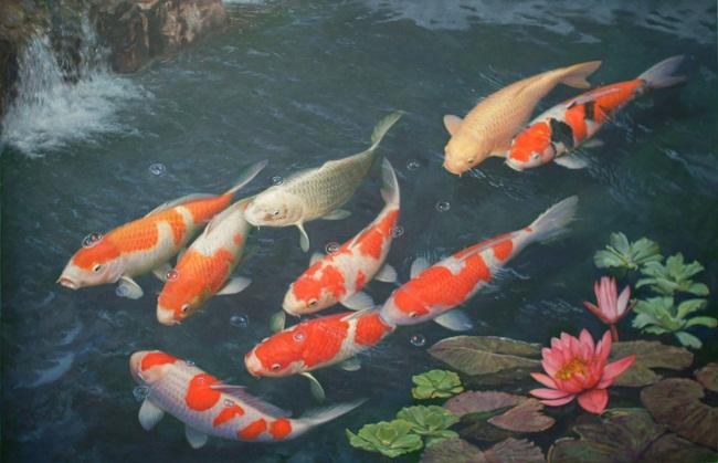 Ngắm cá Koi tuyệt đẹp ở Nhật Bản