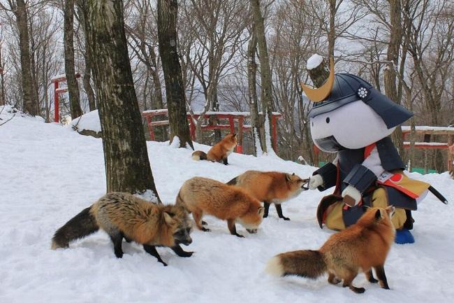Độc đáo ngôi làng của những chú cáo ở Nhật Bản