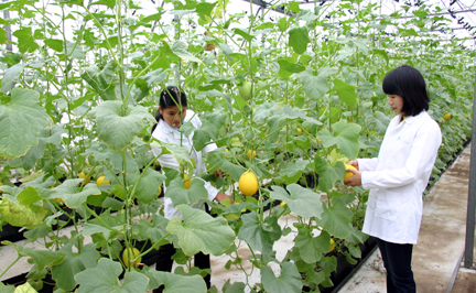 Ngành nông nghiệp đón nhận nhiều học bổng thạc sĩ tại Nhật Bản