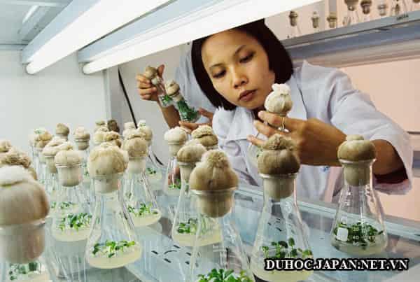 Ngành nông nghiệp đón nhận nhiều học bổng thạc sĩ tại Nhật Bản năm 2017